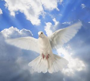 Photo: http://wallpapersinhq.com/images/big/peace_dove_as_a_birthday_gift_for_my_sweet_friend_anca_ancasimona-889215.jpg